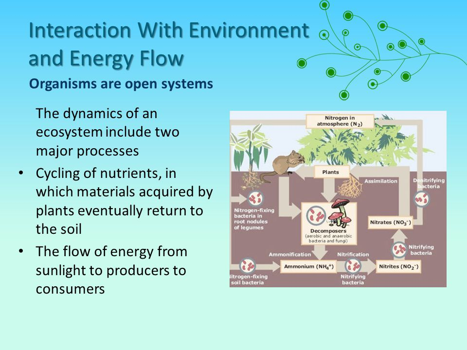 Interaction With Environment and Energy Flow Organisms are open systems The dynamics of an ecosystem include two major processes Cycling of nutrients, in which materials acquired by plants eventually return to the soil The flow of energy from sunlight to producers to consumers