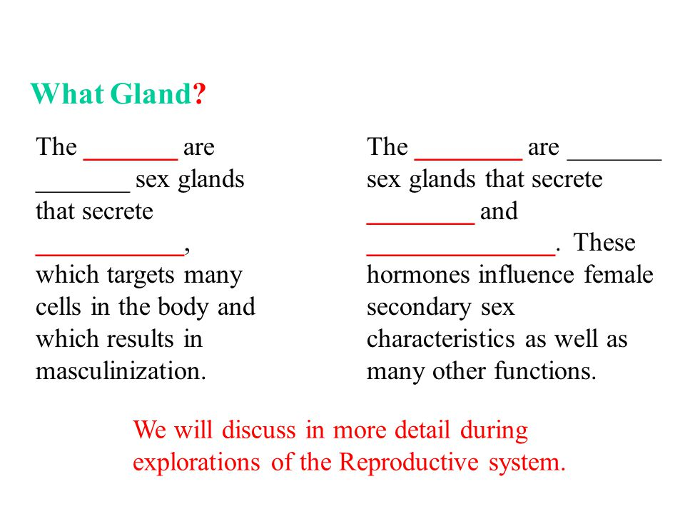 The ________ are _______ sex glands that secrete ________ and ______________.