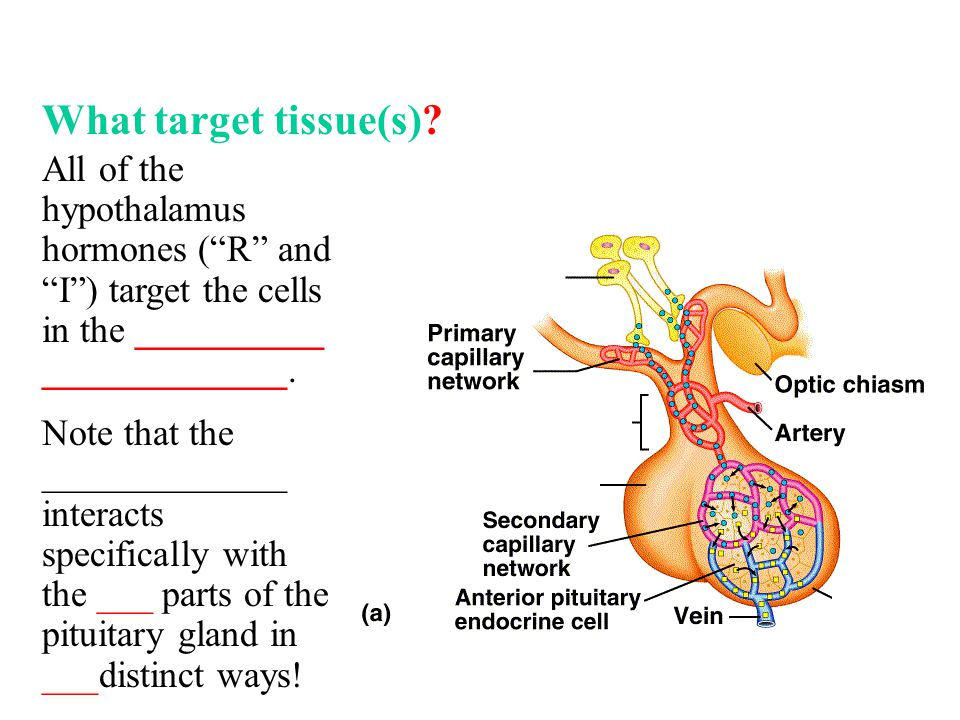 What target tissue(s).