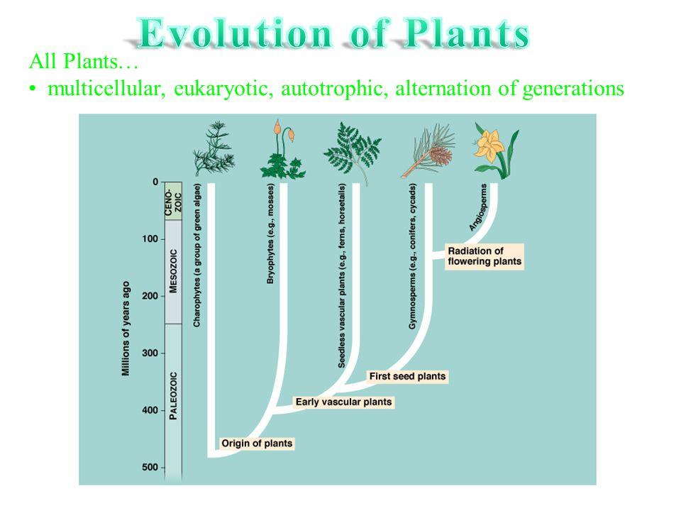 All Plants… multicellular, eukaryotic, autotrophic, alternation of generations