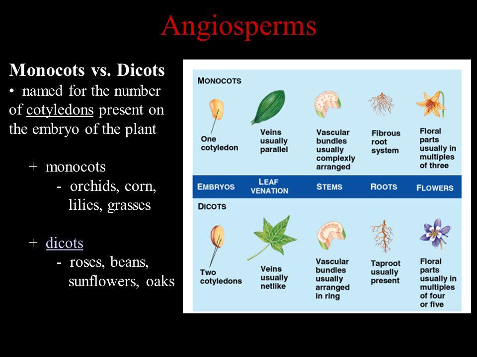 Angiosperms Monocots vs.