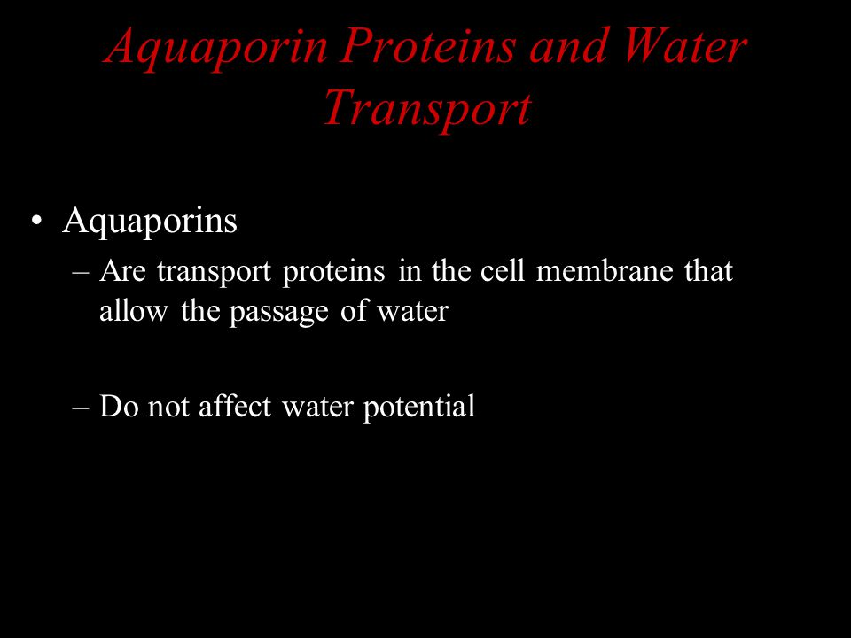 Aquaporin Proteins and Water Transport Aquaporins –Are transport proteins in the cell membrane that allow the passage of water –Do not affect water po