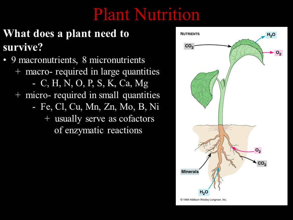 Plant Nutrition What does a plant need to survive? 9 macronutrients, 8 micronutrients + macro- required in large quantities - C, H, N, O, P, S, K, Ca,