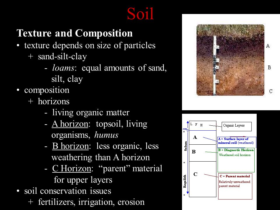 Soil Texture and Composition texture depends on size of particles + sand-silt-clay - loams: equal amounts of sand, silt, clay composition + horizons - living organic matter - A horizon: topsoil, living organisms, humus - B horizon: less organic, less weathering than A horizon - C Horizon: parent material for upper layers soil conservation issues + fertilizers, irrigation, erosion