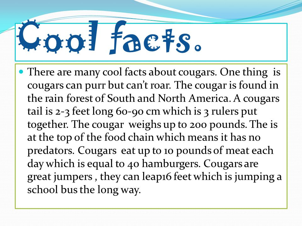 Cool facts. There are many cool facts about cougars.