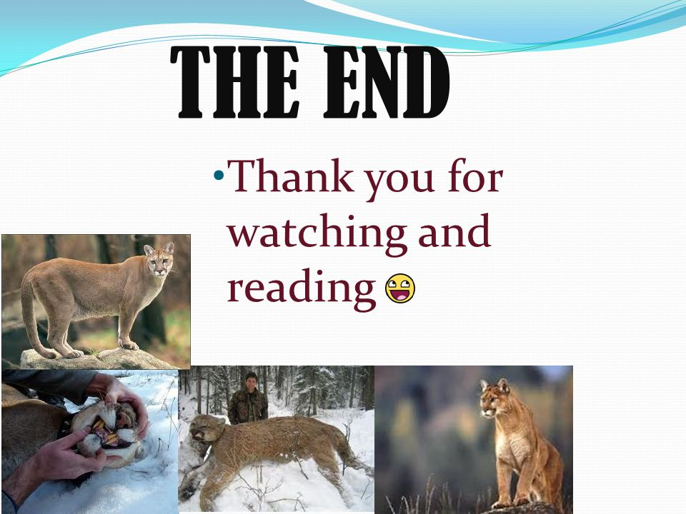 THE END Thank you for watching and reading