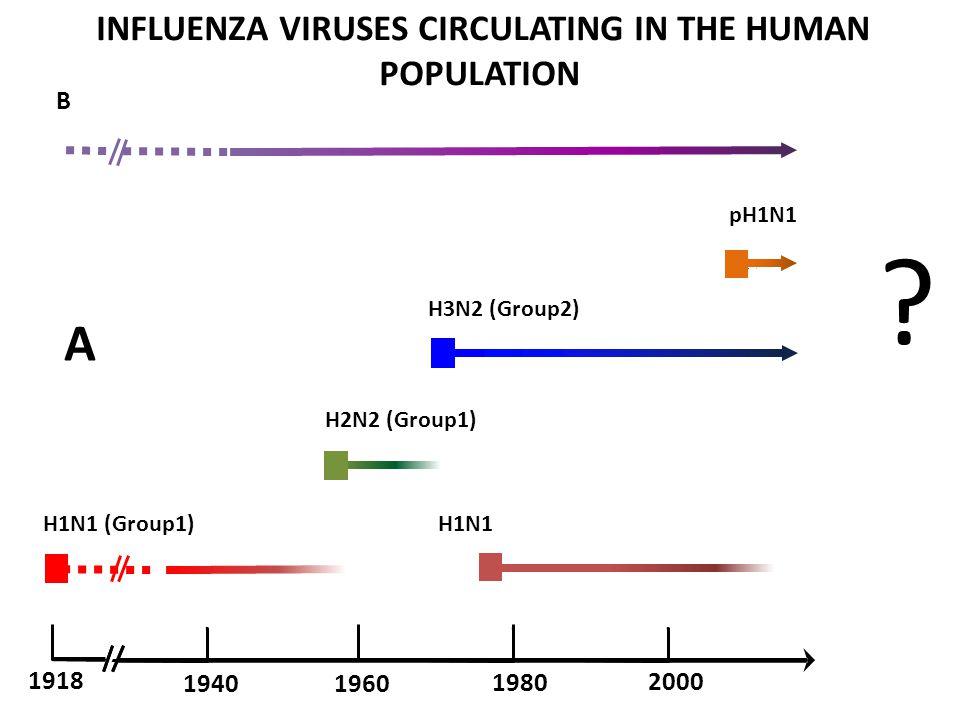 A H1N1 (Group1) H1N1 H2N2 (Group1) 1960 1918 1940 2000 1980 B .