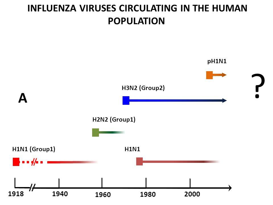 A H1N1 (Group1) H1N1 H2N2 (Group1) 1960 1918 1940 2000 1980 .