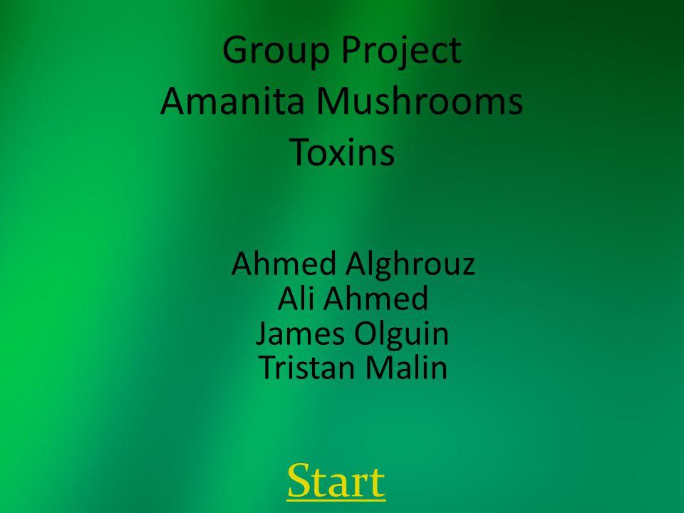 Group Project Amanita Mushrooms Toxins Ahmed Alghrouz Ali Ahmed James Olguin Tristan Malin Start