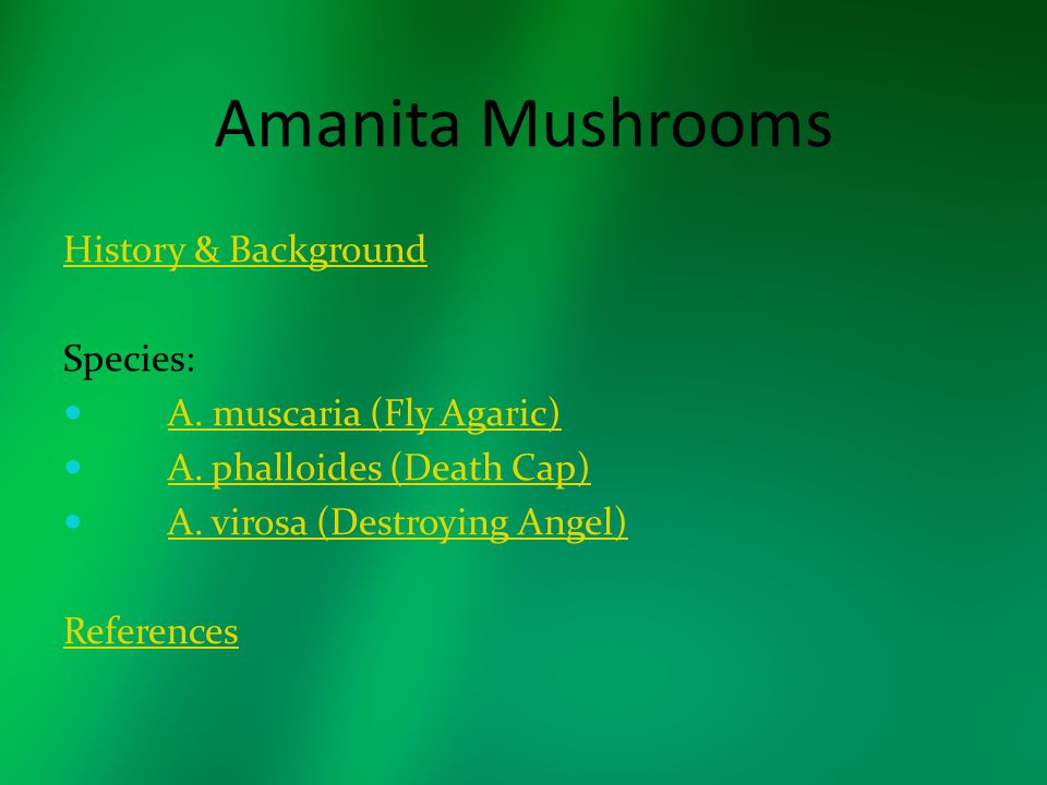 Amanita Mushrooms History & Background Species: A. muscaria (Fly Agaric) A. phalloides (Death Cap) A. virosa (Destroying Angel) References