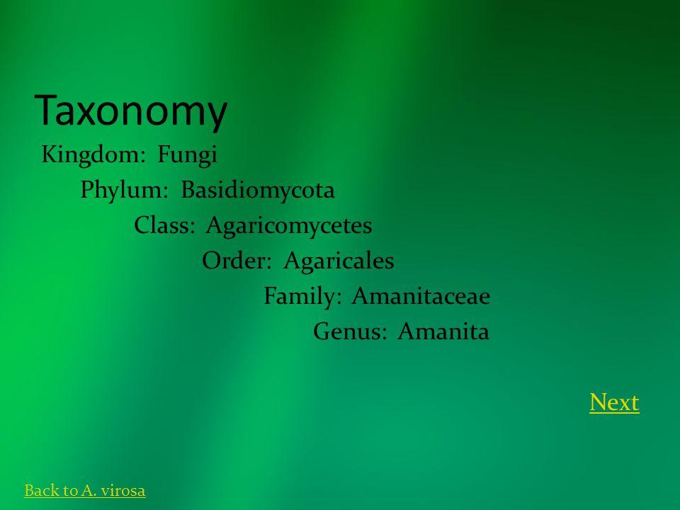 Taxonomy Kingdom: Fungi Phylum: Basidiomycota Class: Agaricomycetes Order: Agaricales Family: Amanitaceae Genus: Amanita Next Back to A.
