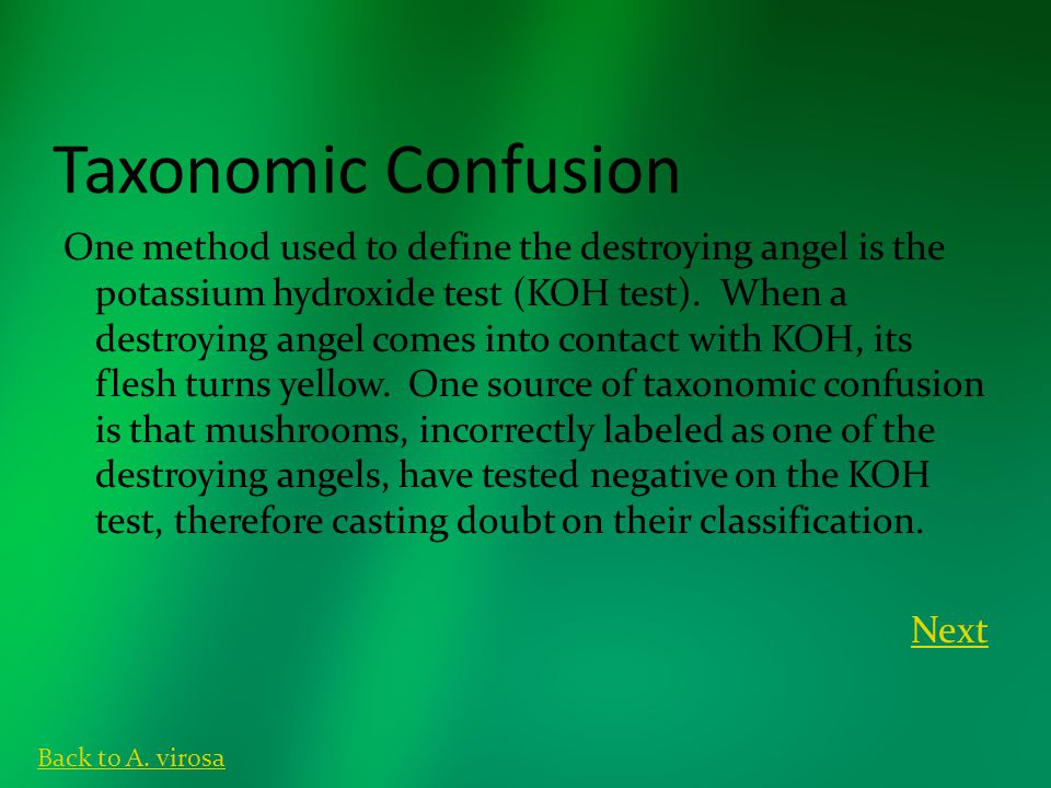 Taxonomic Confusion One method used to define the destroying angel is the potassium hydroxide test (KOH test). When a destroying angel comes into cont