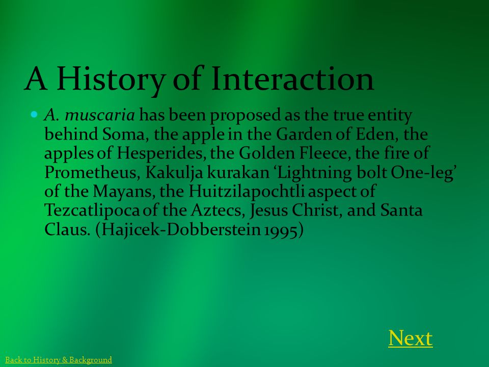 A History of Interaction A. muscaria has been proposed as the true entity behind Soma, the apple in the Garden of Eden, the apples of Hesperides, the