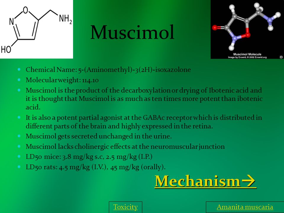 Muscimol Chemical Name: 5-(Aminomethyl)-3(2H)-isoxazolone Molecular weight: 114.10 Muscimol is the product of the decarboxylation or drying of Iboteni