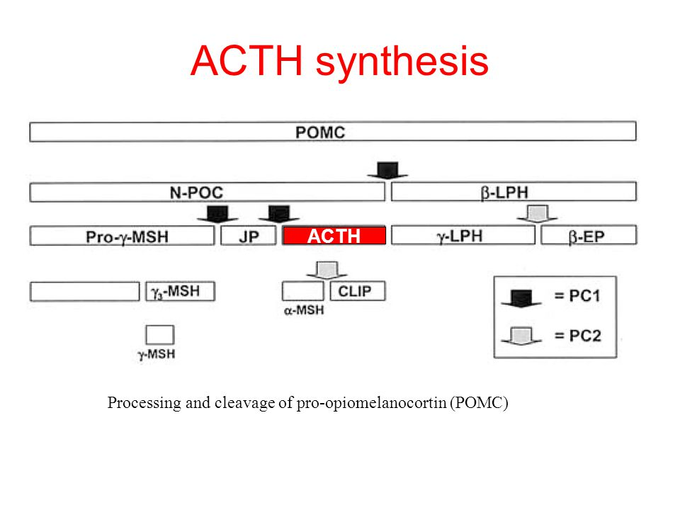 ACTH synthesis Processing and cleavage of pro-opiomelanocortin (POMC) ACTH