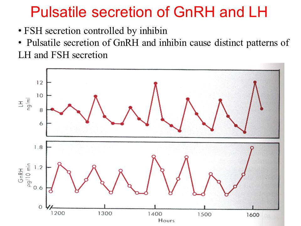 Pulsatile secretion of GnRH and LH FSH secretion controlled by inhibin Pulsatile secretion of GnRH and inhibin cause distinct patterns of LH and FSH s