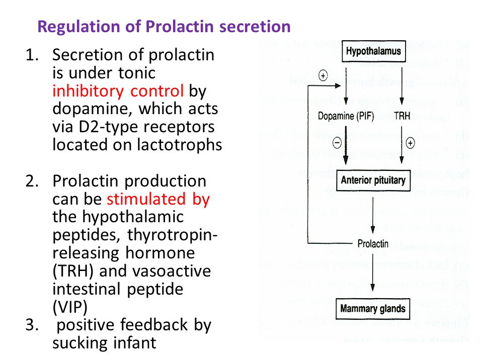 1.Secretion of prolactin is under tonic inhibitory control by dopamine, which acts via D2-type receptors located on lactotrophs 2.Prolactin production