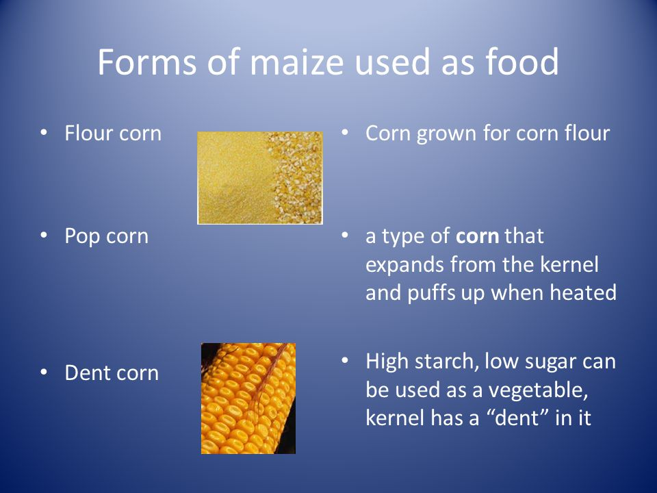 Forms of maize used as food Flour corn Pop corn Dent corn Corn grown for corn flour a type of corn that expands from the kernel and puffs up when heated High starch, low sugar can be used as a vegetable, kernel has a dent in it