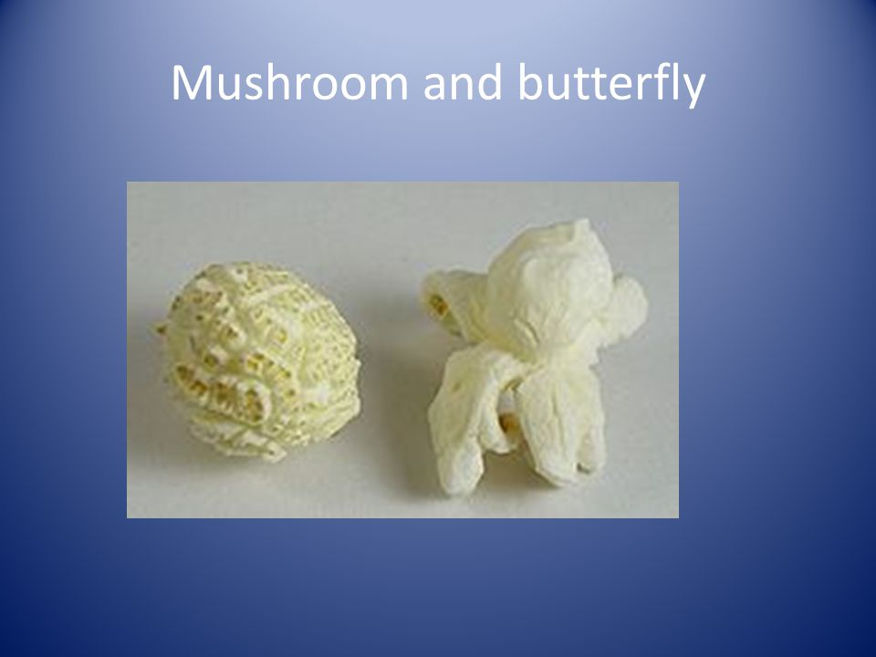 Mushroom and butterfly
