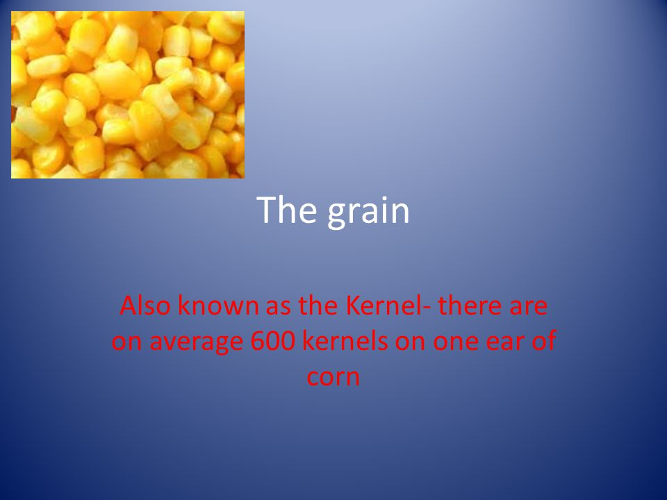 The grain Also known as the Kernel- there are on average 600 kernels on one ear of corn