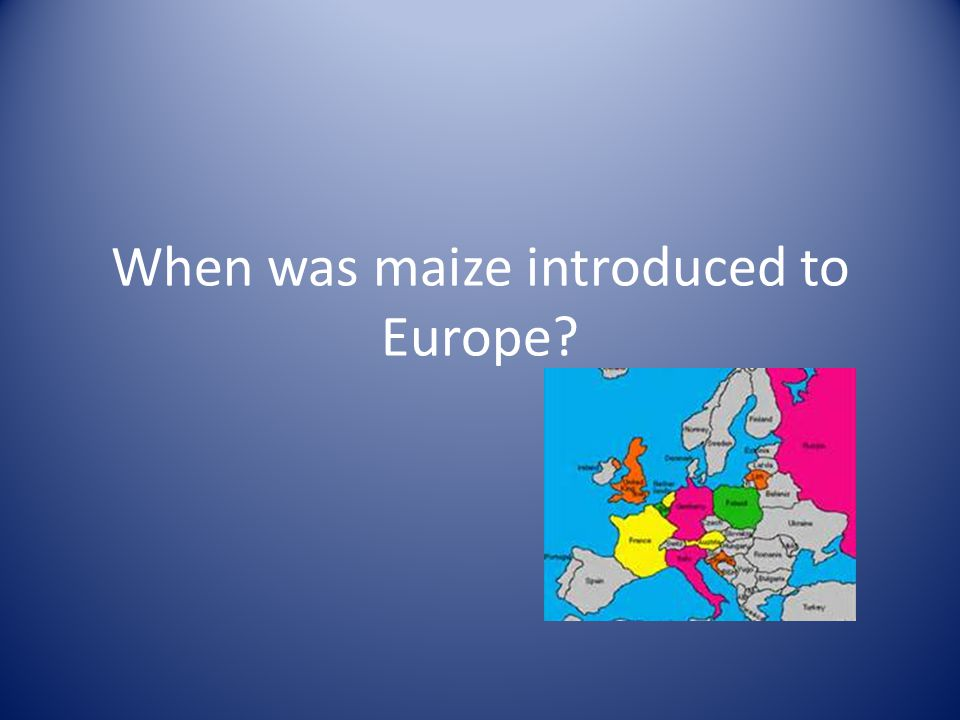 When was maize introduced to Europe