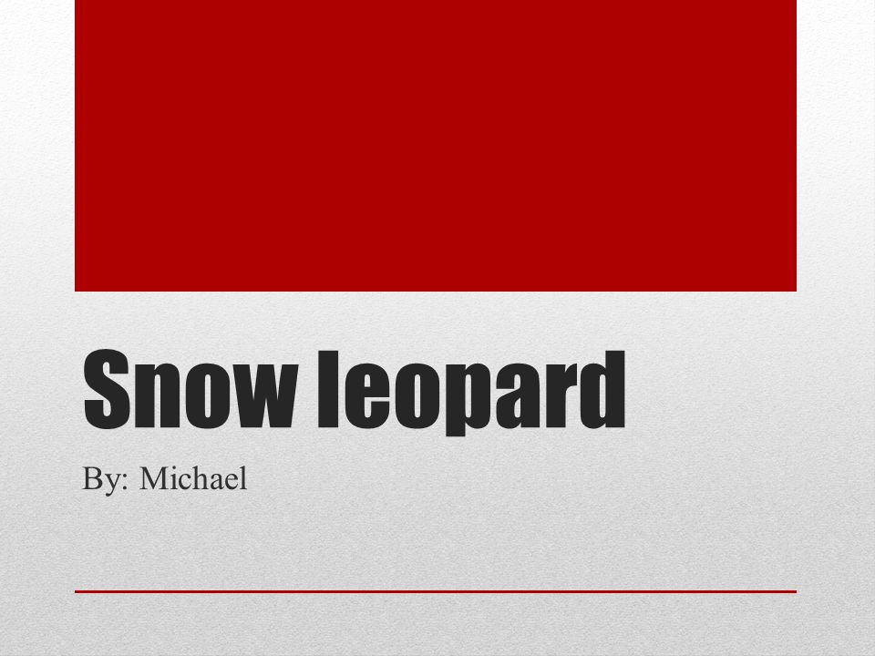 Snow leopard By: Michael