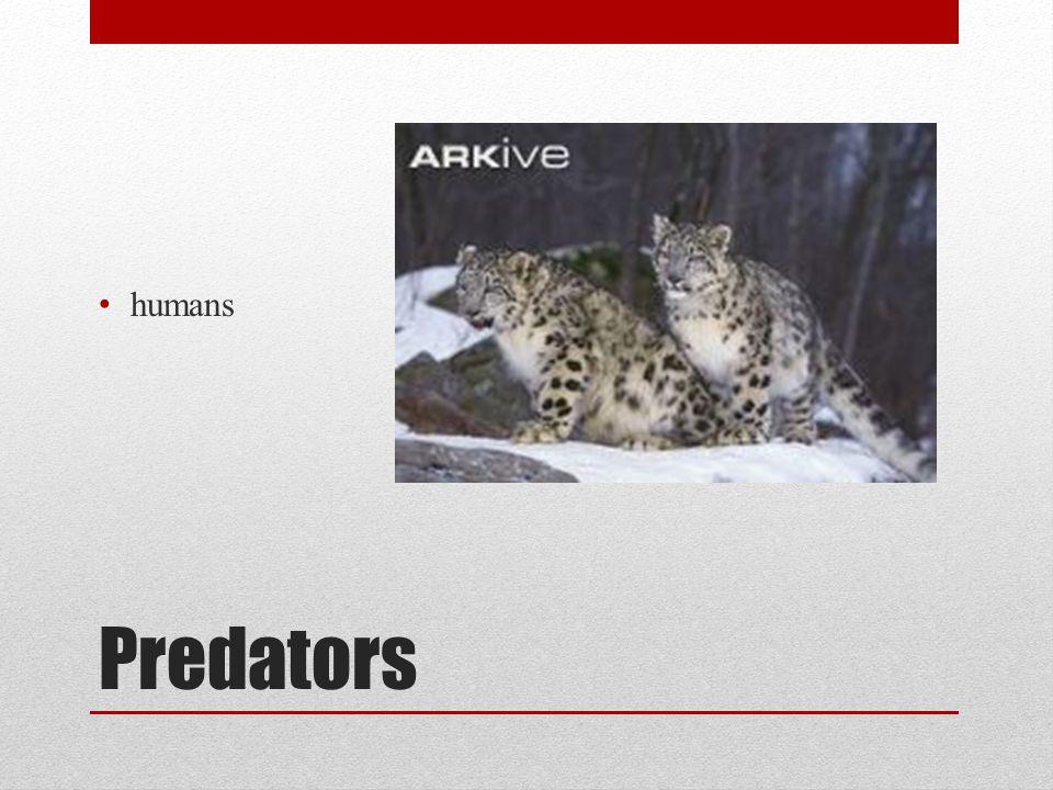Predators humans