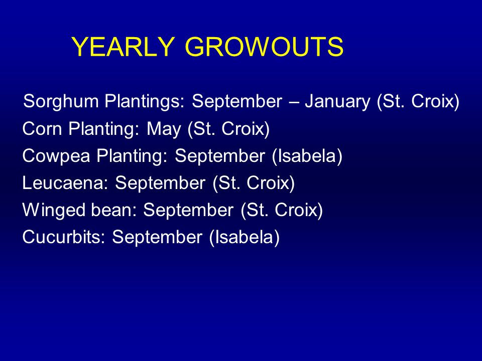 YEARLY GROWOUTS Sorghum Plantings: September – January (St.