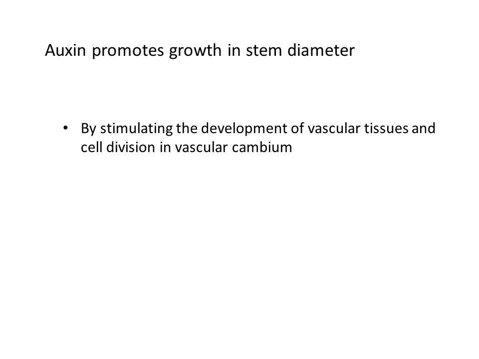Auxin promotes growth in stem diameter By stimulating the development of vascular tissues and cell division in vascular cambium