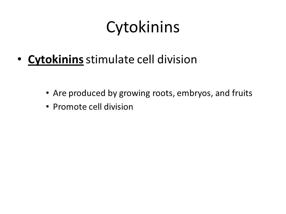 Cytokinins Cytokinins stimulate cell division Are produced by growing roots, embryos, and fruits Promote cell division