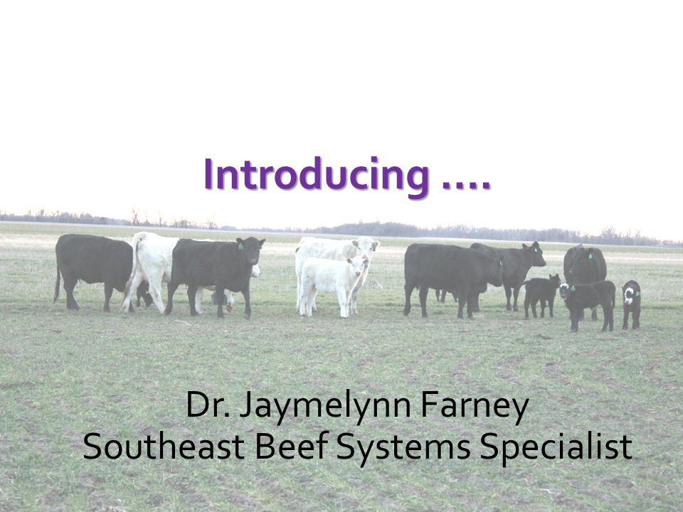 Introducing …. Dr. Jaymelynn Farney Southeast Beef Systems Specialist