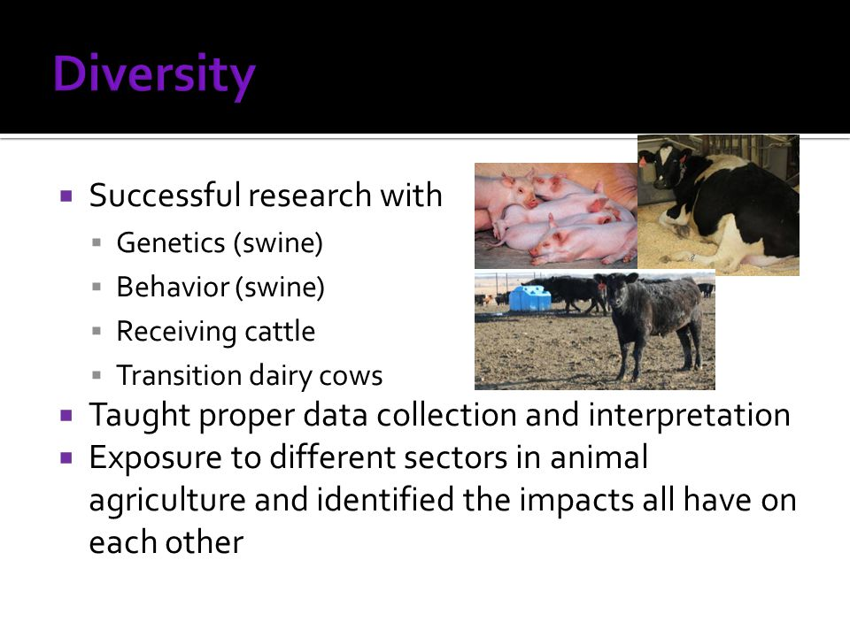  Successful research with  Genetics (swine)  Behavior (swine)  Receiving cattle  Transition dairy cows  Taught proper data collection and interpretation  Exposure to different sectors in animal agriculture and identified the impacts all have on each other