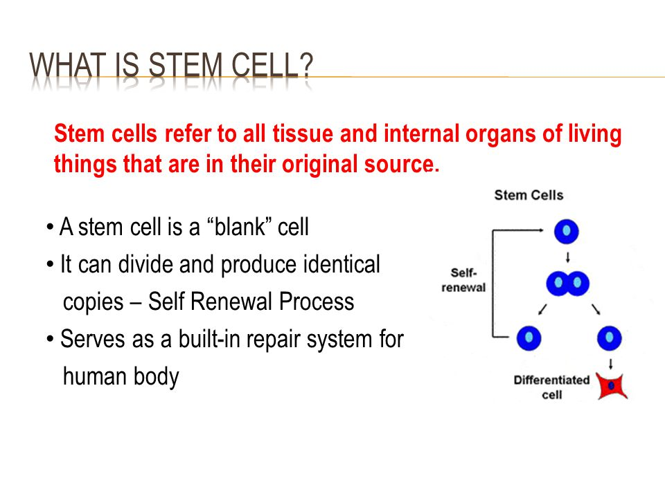 "Stem cells refer to all tissue and internal organs of living things that are in their original source. A stem cell is a ""blank"" cell It can divide and"