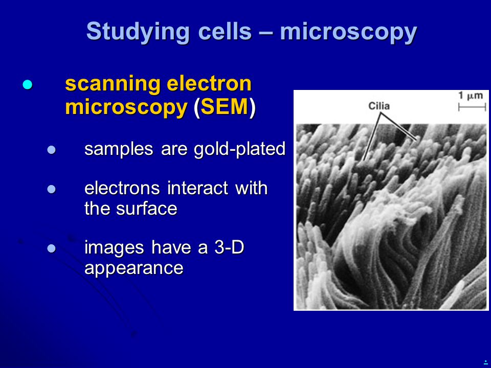 . Studying cells – microscopy scanning electron microscopy (SEM) scanning electron microscopy (SEM) samples are gold-plated samples are gold-plated electrons interact with the surface electrons interact with the surface images have a 3-D appearance images have a 3-D appearance
