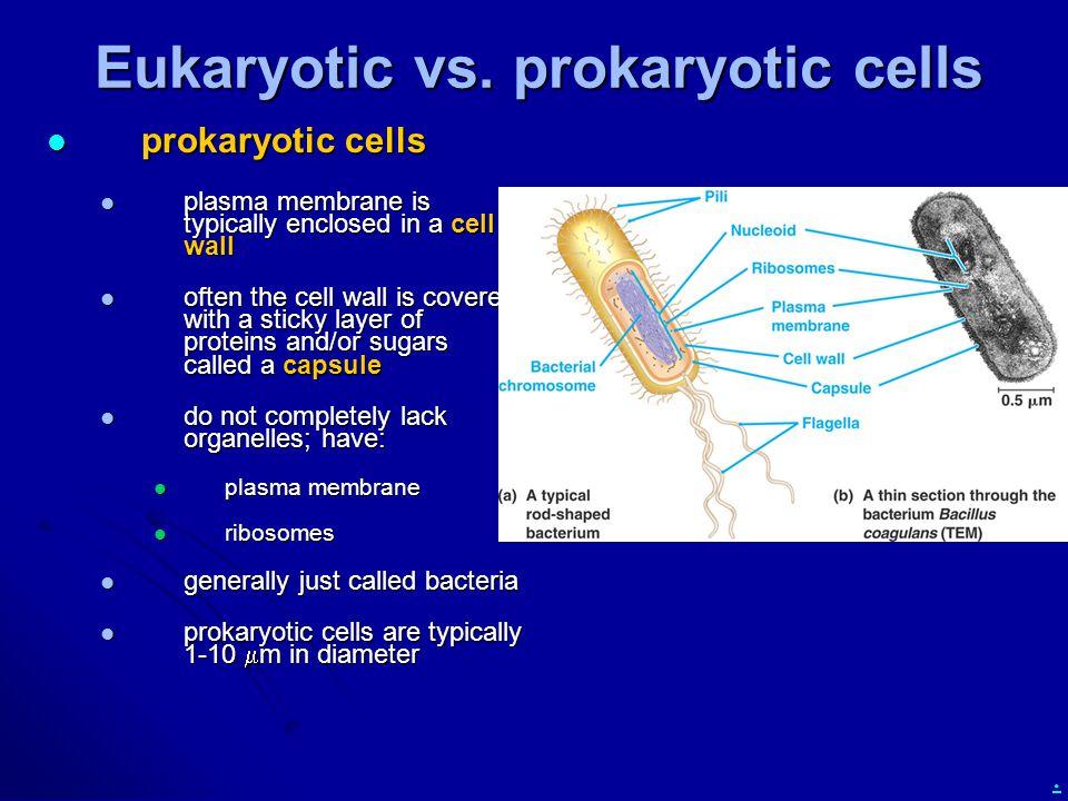 . Eukaryotic vs. prokaryotic cells prokaryotic cells prokaryotic cells plasma membrane is typically enclosed in a cell wall plasma membrane is typical
