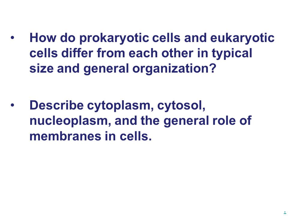 How do prokaryotic cells and eukaryotic cells differ from each other in typical size and general organization.