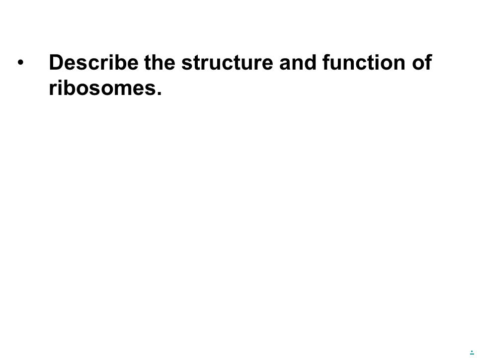 . Describe the structure and function of ribosomes.