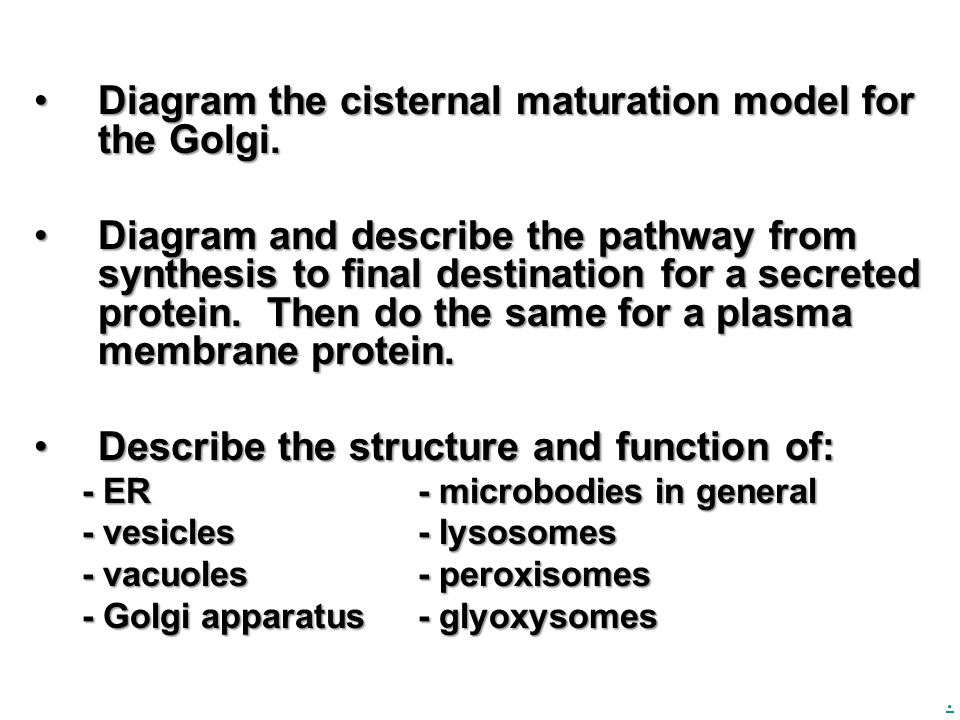 . Diagram the cisternal maturation model for the Golgi.Diagram the cisternal maturation model for the Golgi. Diagram and describe the pathway from syn