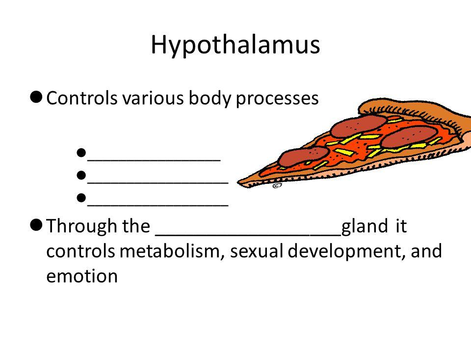 Hypothalamus Controls various body processes _________________ __________________ Through the __________________gland it controls metabolism, sexual d