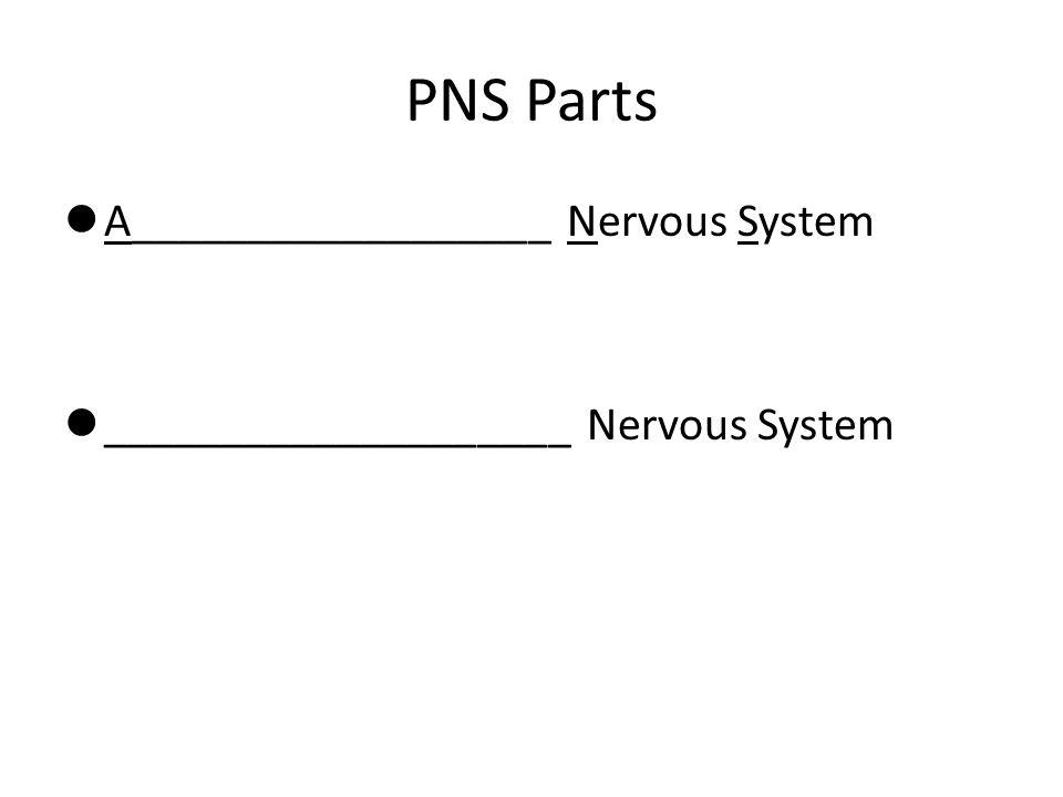 PNS Parts A__________________ Nervous System ____________________ Nervous System