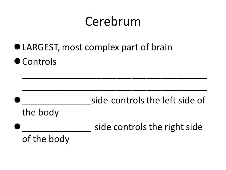 Cerebrum LARGEST, most complex part of brain Controls _____________________________________ _____________________________________ ______________side c