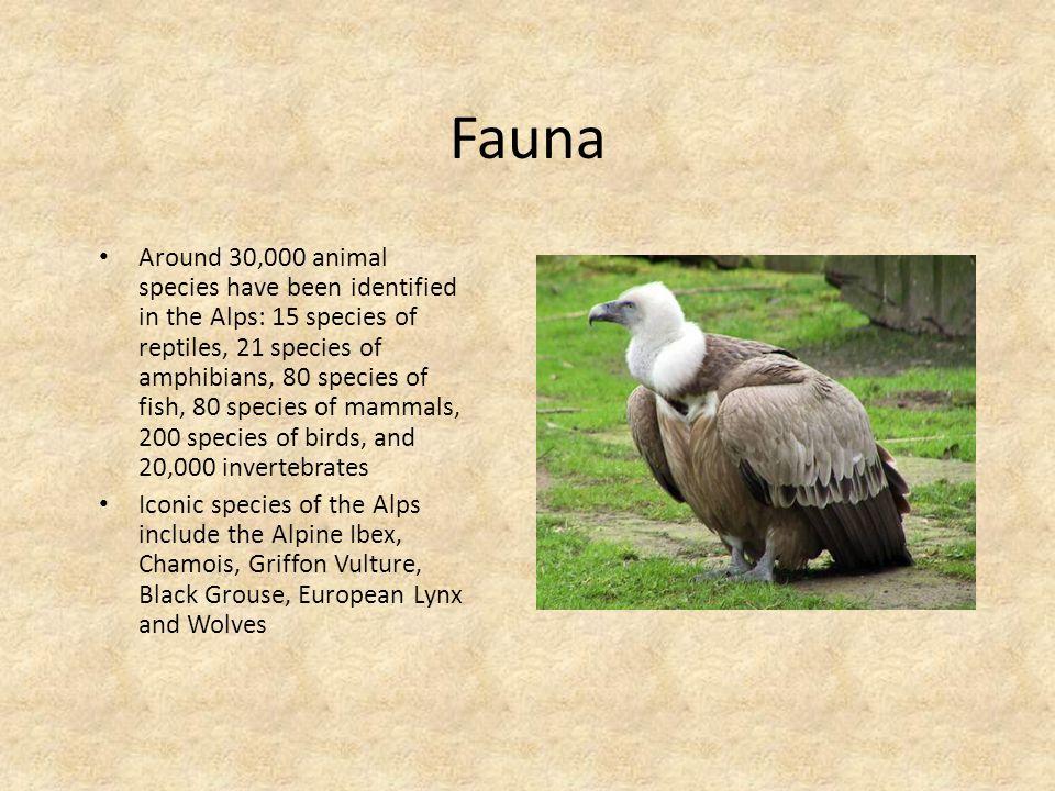 Fauna Around 30,000 animal species have been identified in the Alps: 15 species of reptiles, 21 species of amphibians, 80 species of fish, 80 species