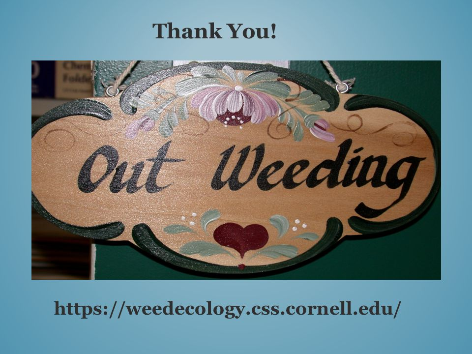 Thank You! https://weedecology.css.cornell.edu/