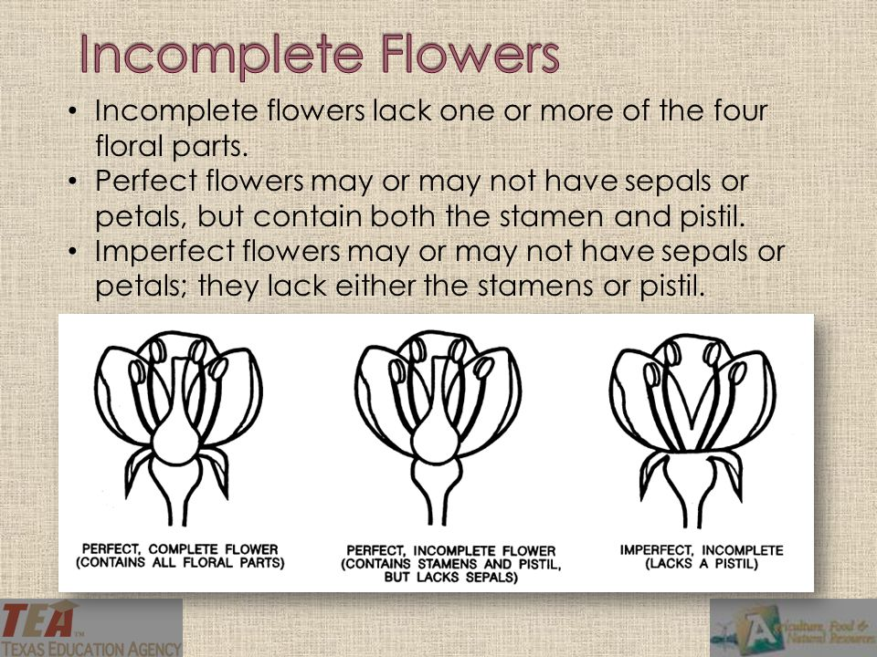 Incomplete flowers lack one or more of the four floral parts. Perfect flowers may or may not have sepals or petals, but contain both the stamen and pi
