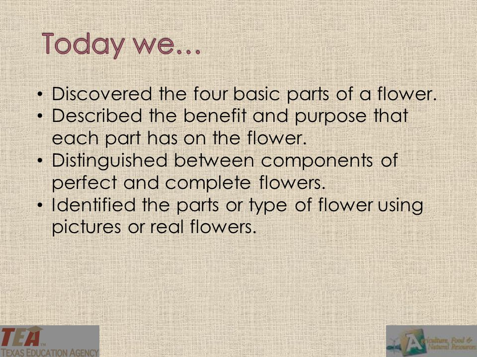 Discovered the four basic parts of a flower. Described the benefit and purpose that each part has on the flower. Distinguished between components of p