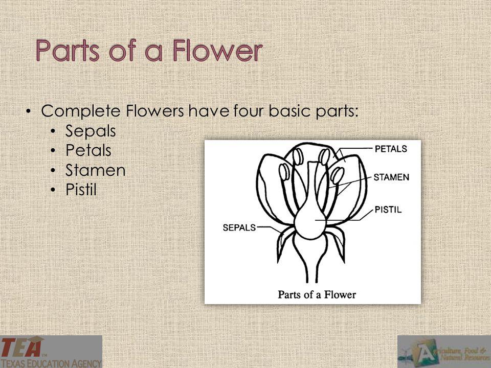 Complete Flowers have four basic parts: Sepals Petals Stamen Pistil