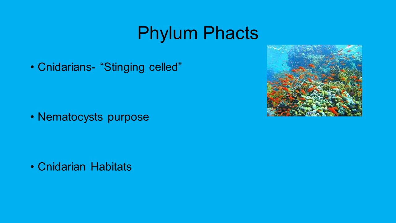Phylum Phacts Cnidarians- Stinging celled Nematocysts purpose Cnidarian Habitats