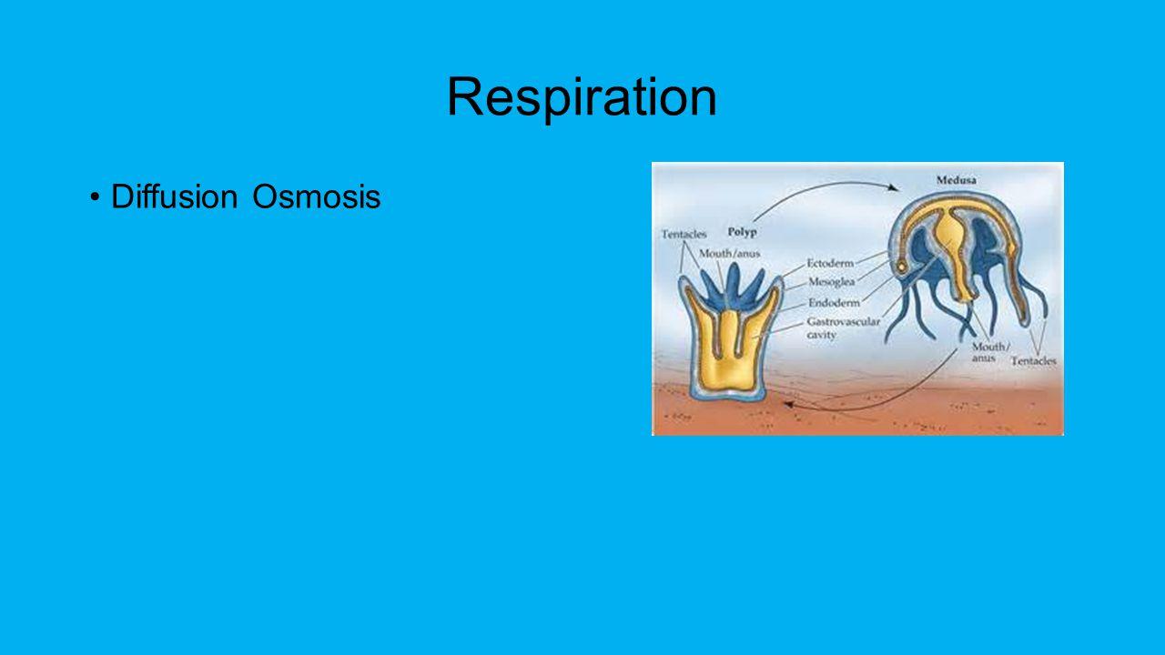 Respiration Diffusion Osmosis