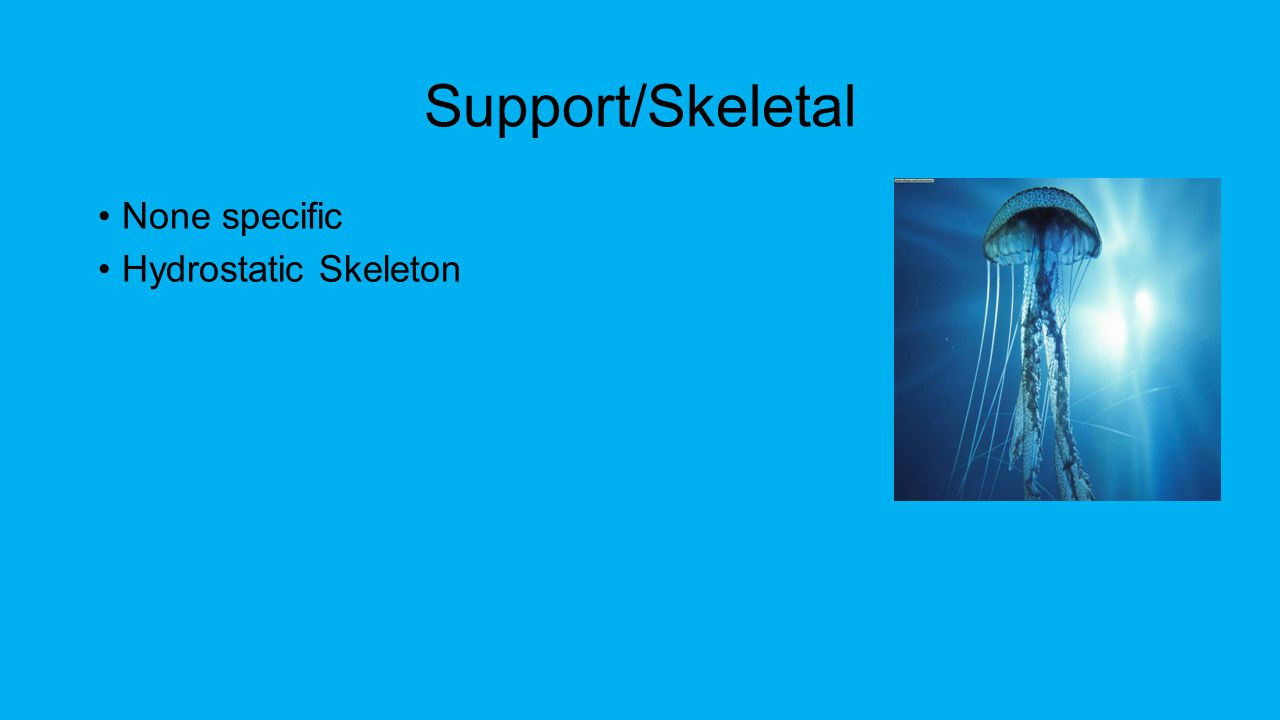 Support/Skeletal None specific Hydrostatic Skeleton
