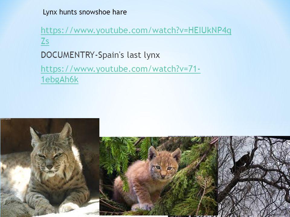 https://www.youtube.com/watch?v=HEIUkNP4q Zs DOCUMENTRY-Spain's last lynx https://www.youtube.com/watch?v=71- 1ebgAh6k Lynx hunts snowshoe hare